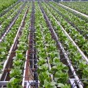 Israel Drip Irrigation Technology_Netafim